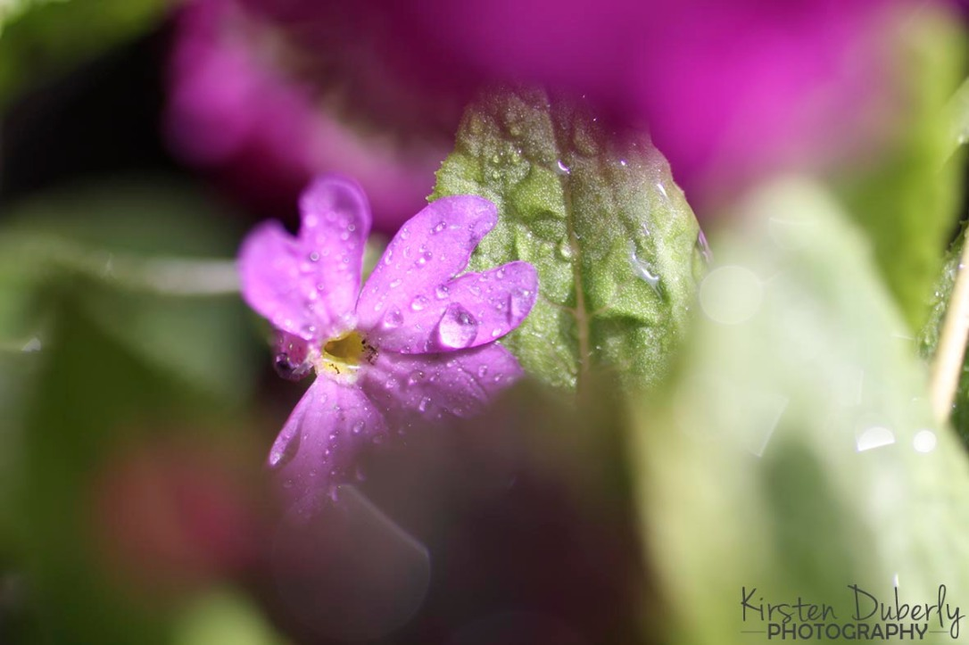 KDuberlyPhotography2