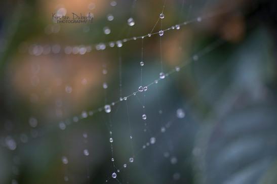 Macro dewdrops